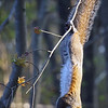 Wild-B-Nancy Brown-Spring Pruning Hang Out