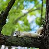 Wild-C-Tobé Saskor-Rare White Squirrel Watching You