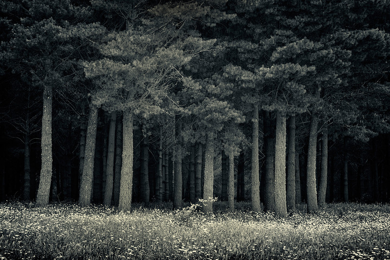 A Forest Somewhere