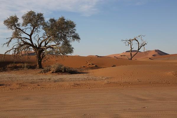 Tracks across Namib Desert