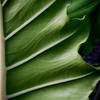 PAT-A-HM-Bonny Henderson-Leafy Swirls