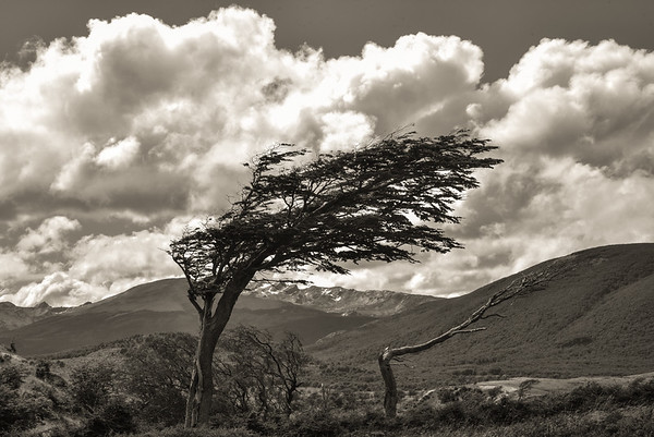 Windblown, Patagonia