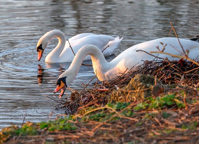 Swans Nest building, Grovelands Park
