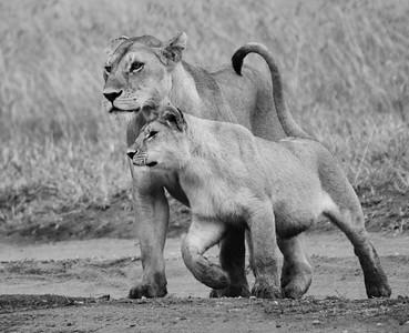 Staying close to mum