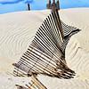 SHA-A-2nd-Grace Hill-Shadows on the Sand