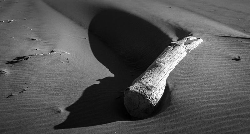 SHA-B-2nd-Andrew Steidinger-Beach Beauty