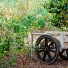 WHE-A-Susan Bailey-Wheelbarrow in Spring
