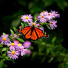 Wing-A-Susan Bailey-Butterfly Beauty