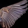 Wing-A-2nd-Debra Regula-Wing and a Prayer