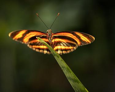 3-Intermediate-Open-3-Tamara_Cook-Butterfly