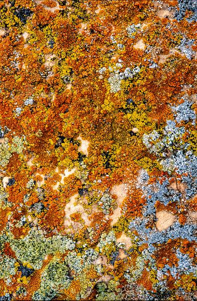 3-Intermediate-Assigned_-_Textures-DNP-Tyler_LaMont-Lichen