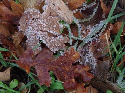 3-Intermediate-Assigned_-_Textures-DNP-Janine_Hutchinson-Fall_Flora