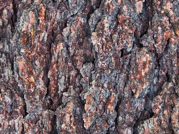 4-Advanced-Assigned_-_Textures-DNP-James_Macgregor-Bark