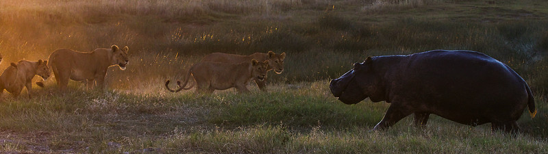 Evening stand-off at the waterhole