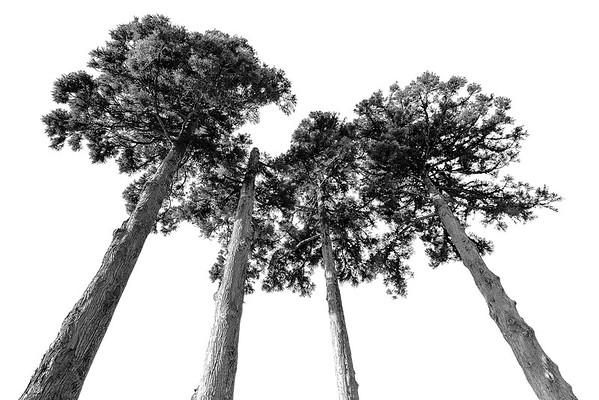 Conifers Summit