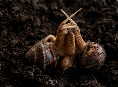 19_Snails doing what comes naturally_Yvonne Marr