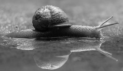 19_Faster Than A Speeding Snail_Karen Goh
