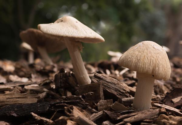 Fungi in Trent Park