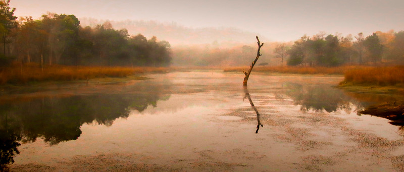 Early Morn, Pench NP