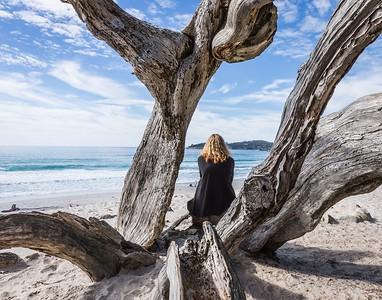 17_Tree on a beach_Ian Rawlinson