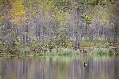 19_FOREST REFLECTIONS_Annie Nash
