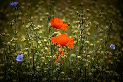 18_Wild flowers_Jackie Harding