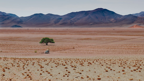 Isolated in the Namib Desert