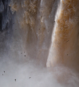 Swallows over Iguazu Falls