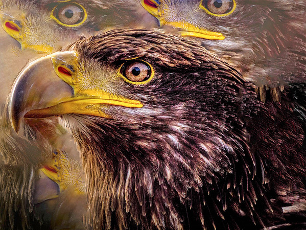 18_Eagle Eyes_Michael Crowley