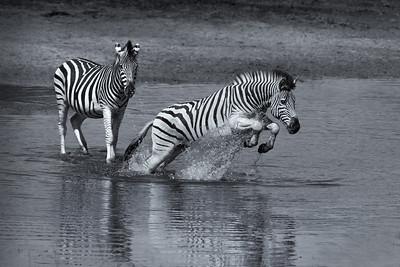 17_Spooked Zebra_Annie Nash