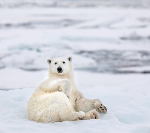 Polar Bear Watching