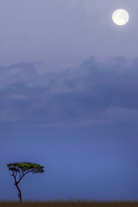 The tree & the moon