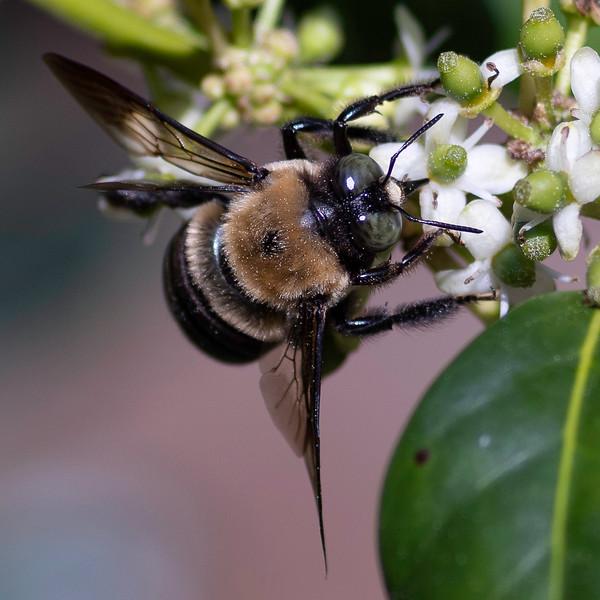 Tier 1-Mike Stevens-Backyard Bee