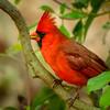 Tier 2-HM-Dee Williams-Early Bird Got the Worm