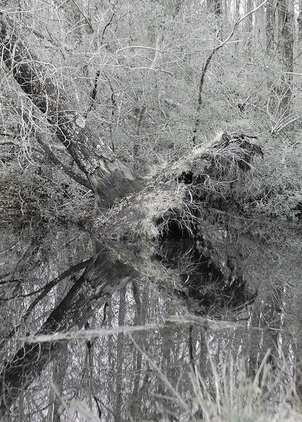 OLD-T1-Shari Dutton-Old Tree Monster