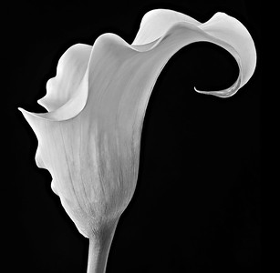 Less-T3-2nd-Donna Ford-Calla Lily