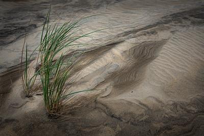 Less-T3-HM-Gisela Danielson-Wandering Dunes