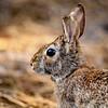 Less-T3-Dale Jennings-Energizer Bunny