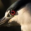 Less-T1-Tom Batts-Red Eye