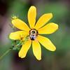 Less-T1-Larry Thomas-Bee Beautiful