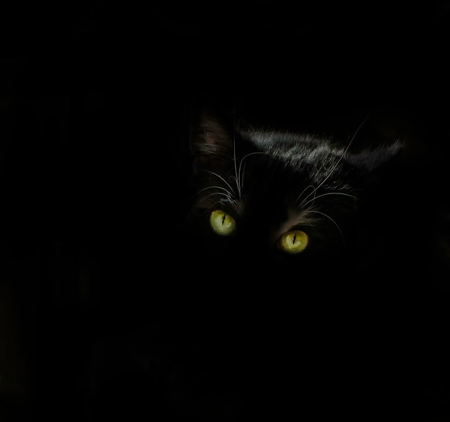 Less-T1-Shari Dutton-Undercover Cat