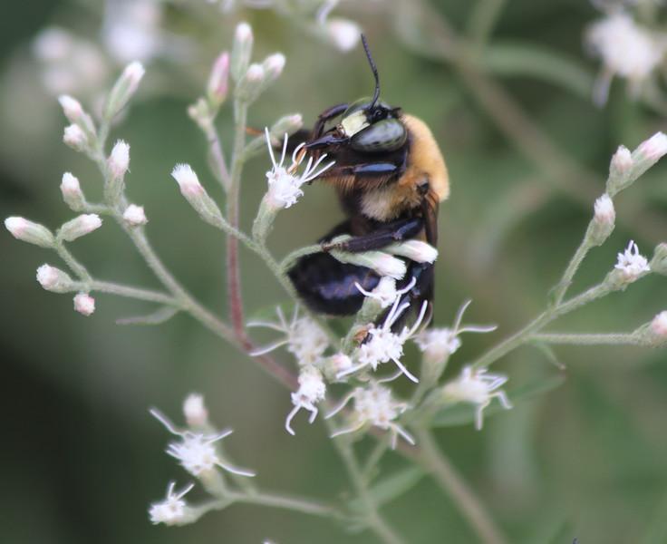 Less-T1-Larry Thomas-Bee Happy