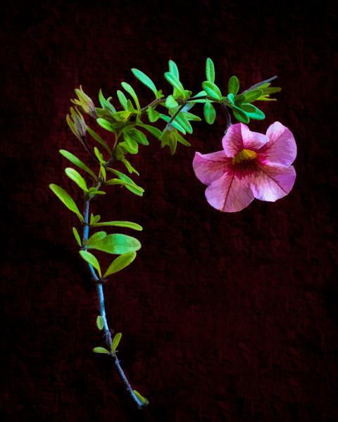 Less-T2-Tobé Saskor-Tiny Happiness Flower