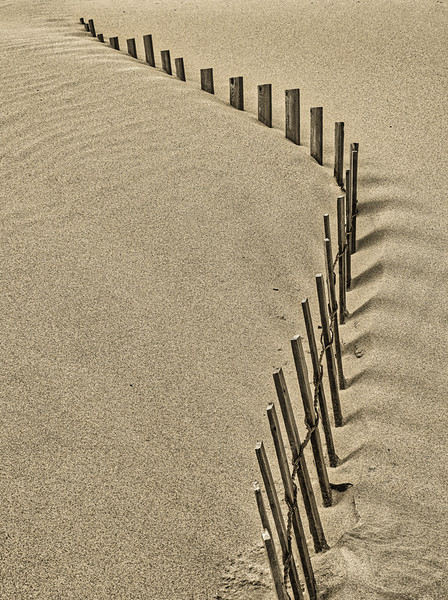 Less-T2-Jacques Wood-Line in the Sand
