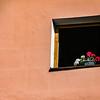 Less-T3-Dave Powers-Window Bouquet