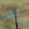 Less-T3-1st-Donna Ford-Dragonfly