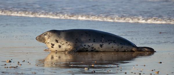 Seal Relaxing