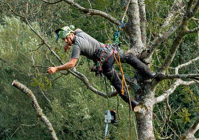 17_Tree Surgeon_Yvonne Marr