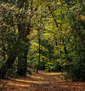 Through the trees_Yvonne Marr