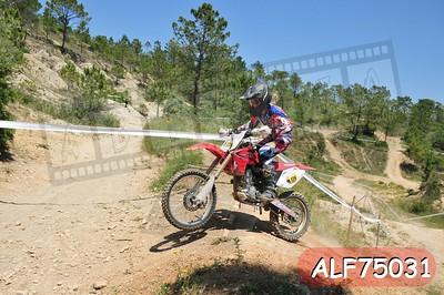ALF75031